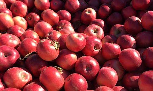 fresh-new-york-state-apples